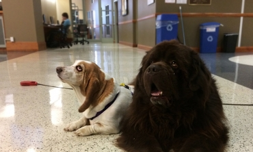 Bucky & Peaches therapy dogs