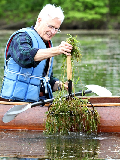 Using a customized garden rake, Biology Professor Emeritus Peter Tobiessen easily pulls invasive curly-leaf pondweed from Collins Lake in Scotia, N.Y. (Photo by Matt Milless)